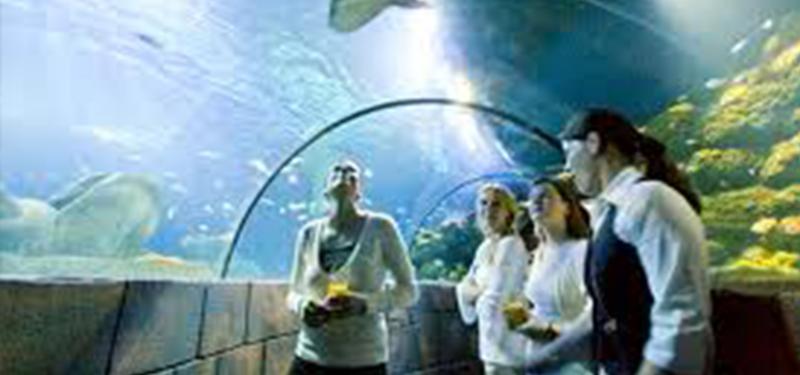 Sea Life - Hannover