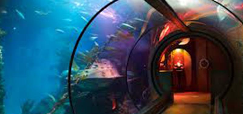 Sea Life - Königswinter